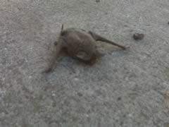 Harmful Effects of Bats