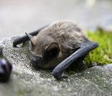 bat4.jpg